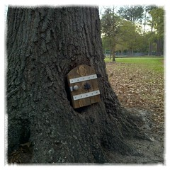 Fairies in the park?