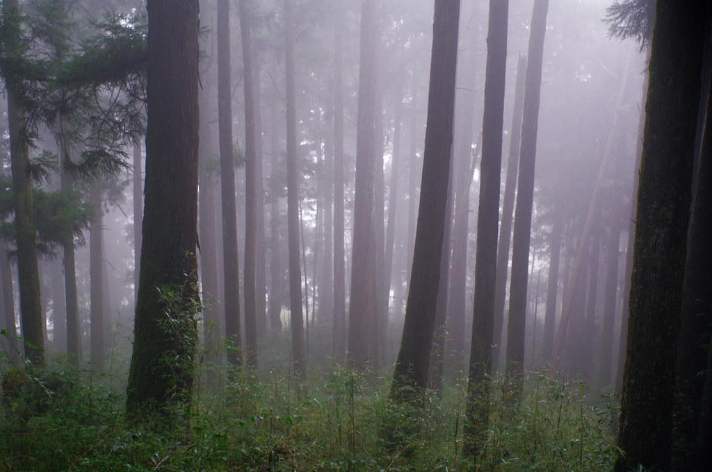 霧中的阿里山