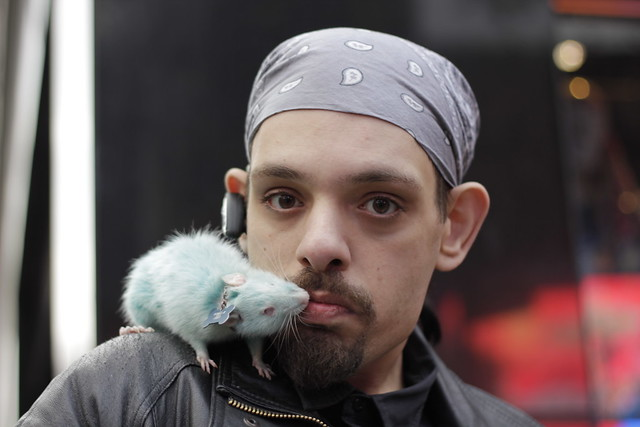 Man kissing blue rat