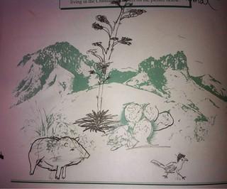 Javelina and Road Runner Drawing in Big Bend Junior Ranger Booklet