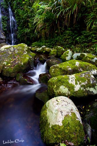life plants green nature water creek forest canon walking waterfall moss rocks track wildlife australia bugs qld oreillys snakes lamington lamingtonnationalpark leeches hinterland rainforestresort 5dmkii lockiecooke