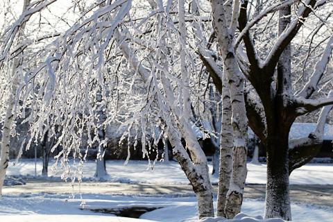 winter2-0312