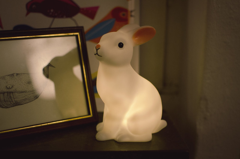 kanin02