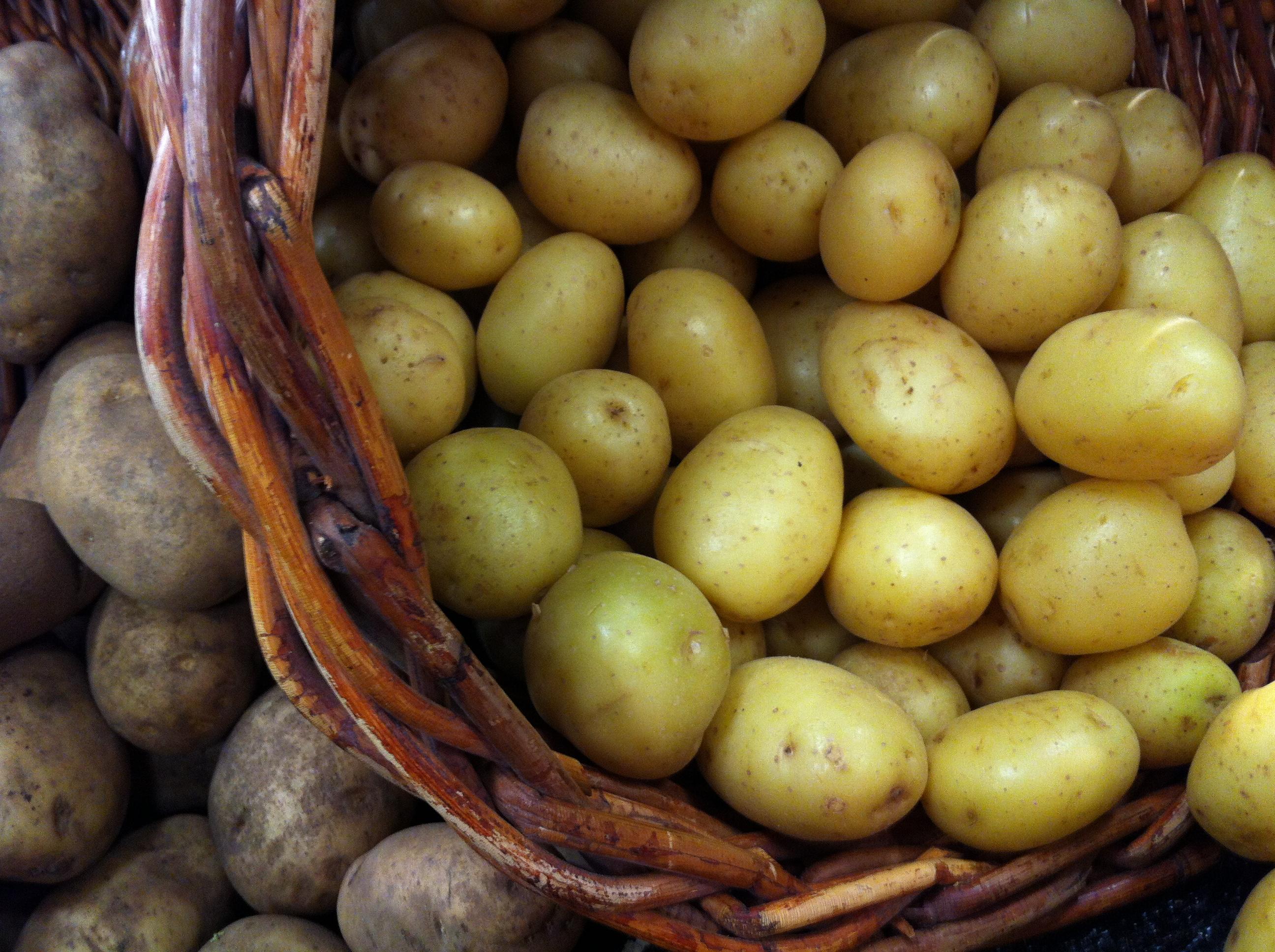 Potato VS Potato