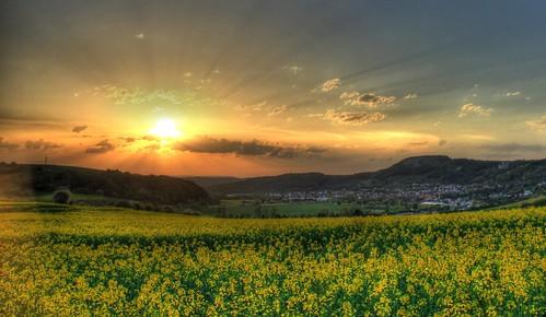 無料写真素材, 自然風景, 田園・農場, 朝焼け・夕焼け, 菜の花・アブラナ