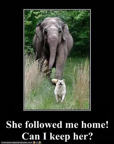 She Followed Me Home Can I Keep Her