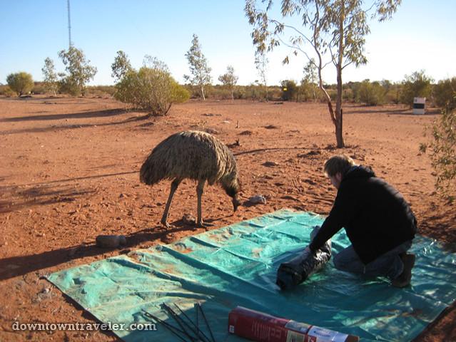 Australian Outback Emu