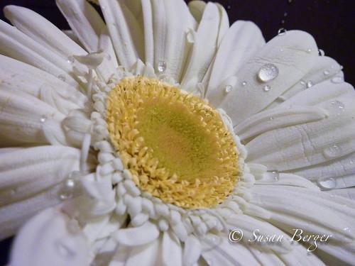 89/366 March 30, 2012 Last Flower