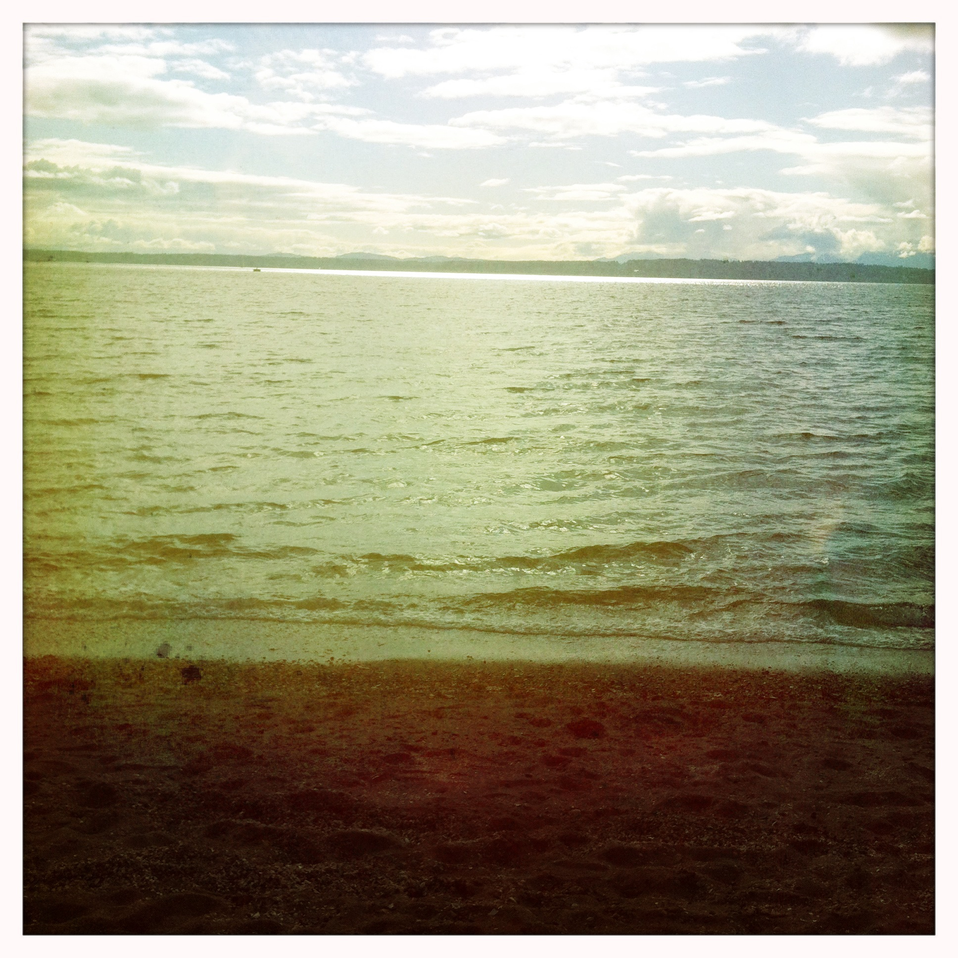 Golden Gardens in Spring