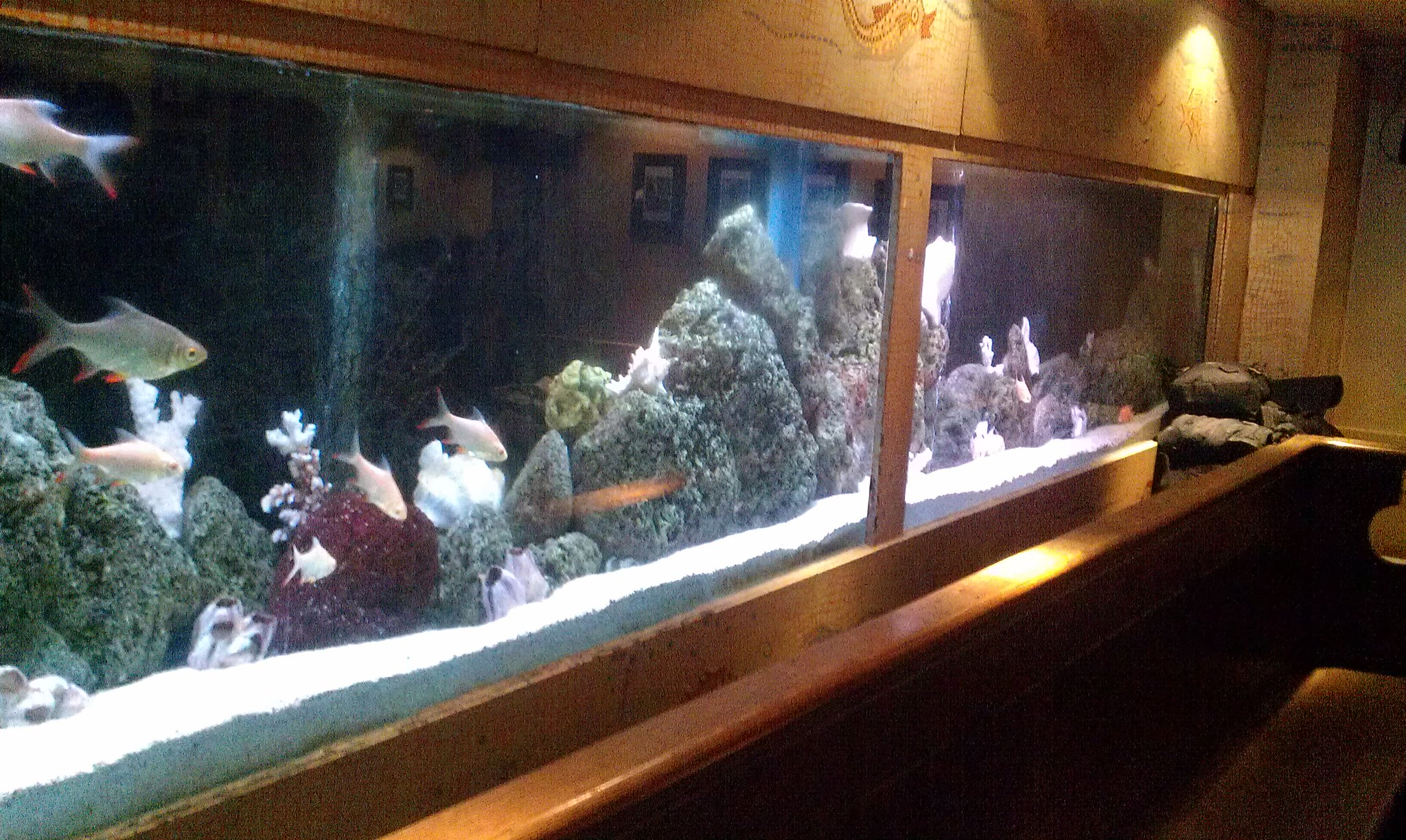 The legendary fish tank in the bush house bar flickr for Fish tank house