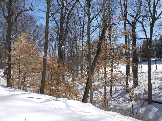 月, 2014-02-17 13:33 - Rockefeller Park
