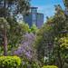 Torre Bancomer desde chapultepec 104