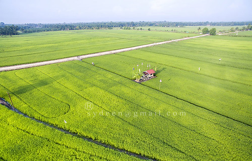 road travel sky food house plant green nature beautiful field grass rural landscape asian high asia rice natural paddy farm flag traditional grow culture scene aerial fresh growth malaysia land cai agriculture malacca