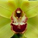 Green Beauty Orchid Paradise Newton Abbot Devon