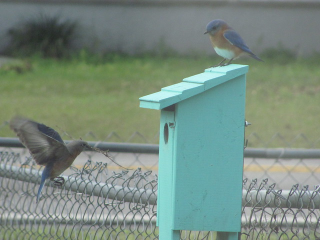 Nesting material to the box