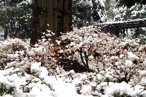 troncos y arbustos