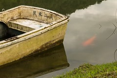The boat and fish