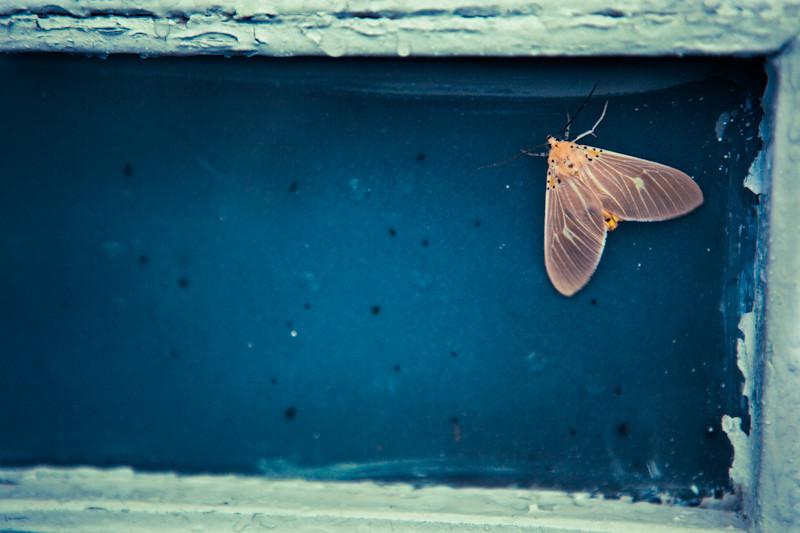 moth-1.jpg