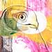 Myrhauk (saarbar art)
