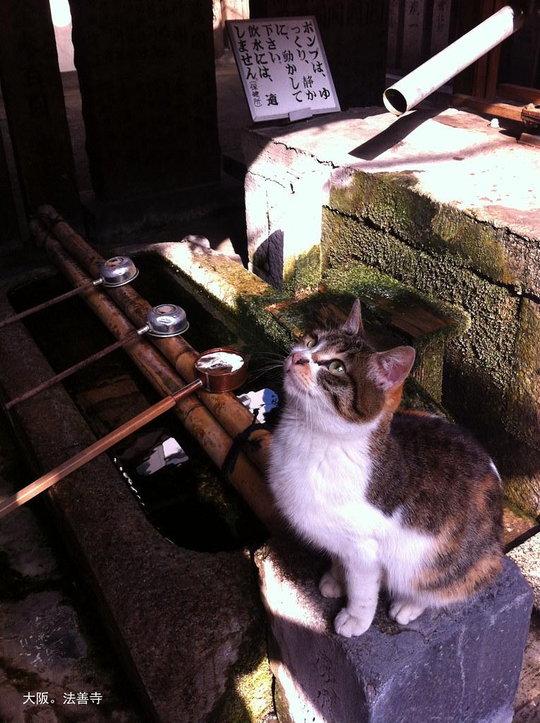 法善寺。貓。