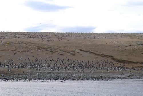 Punta Arenas-35