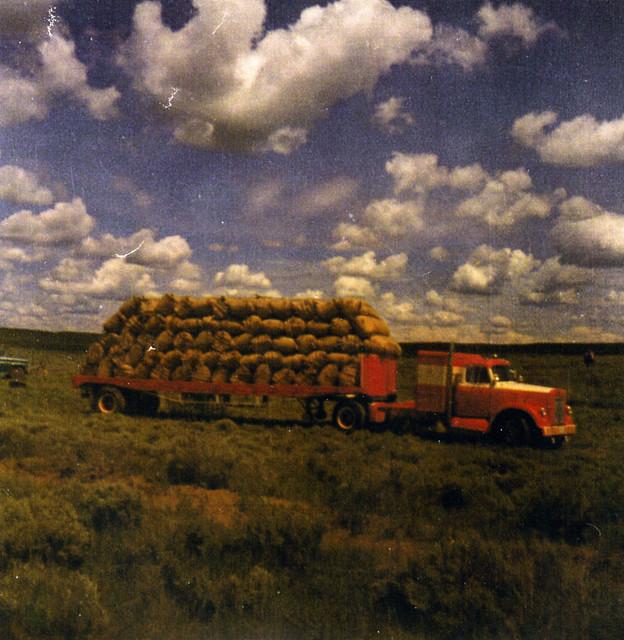 Sheep wool load