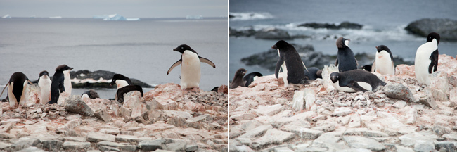 antarctica-blog-33