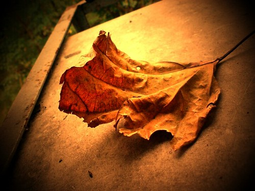 The last leaf... by {israelv}