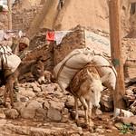Donkeys in Kandovan, Iran