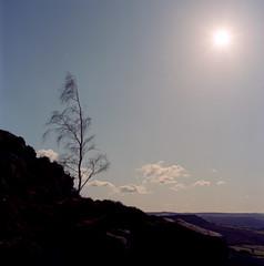Tree Silhouette II