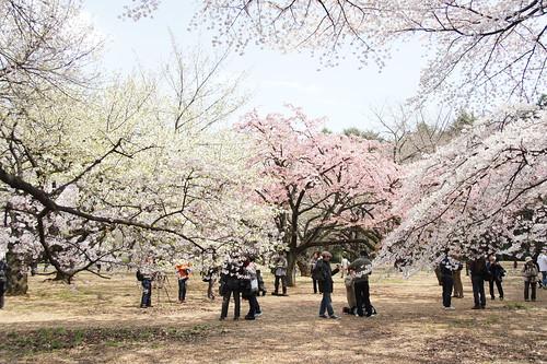 2012/04/06 新宿