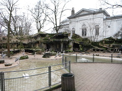 A look towards the life of animals at Artis Royal zoo - Things to do in Amsterdam