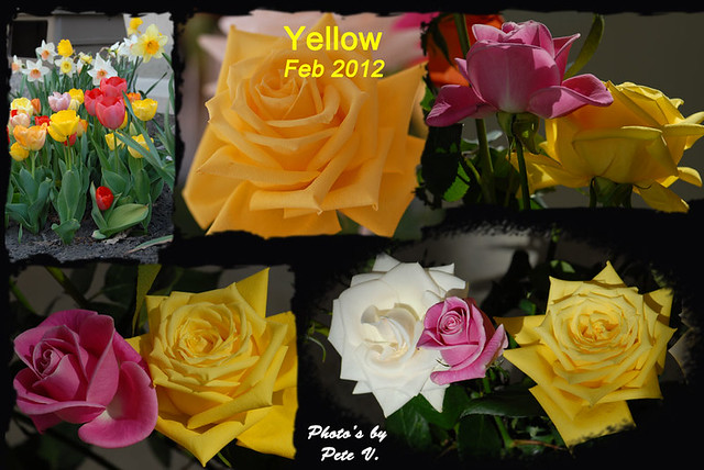 Yellow-7