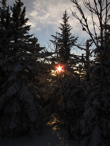 from new trees sunset mountain snow tree cherry mt martha nh hampshire february feb 2012