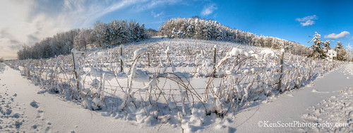 Vineyard View ... after blizzard, panorama