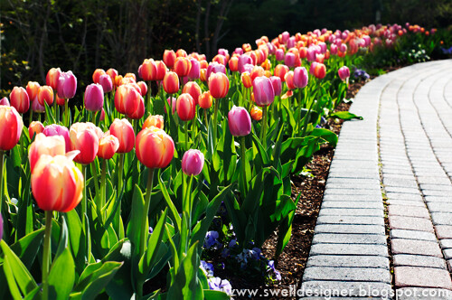 tulip-gardens-thanksgiving-point-2