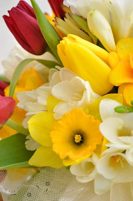 spring flowers - flori de primavara