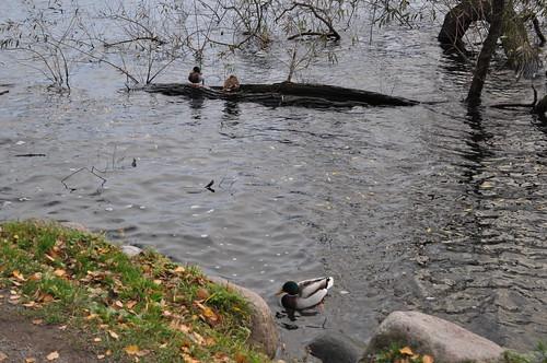 2011.11.11.279 - STOCKHOLM - Norr Mälarstrand