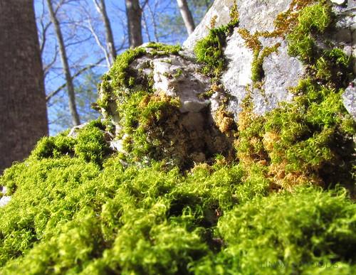 green rock moss