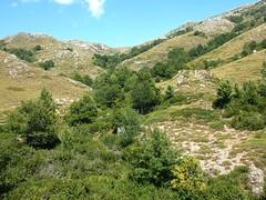 RD au-dessus du ruisseau du Cuscionu : amont du ruisseau vers Bocca Chiralba