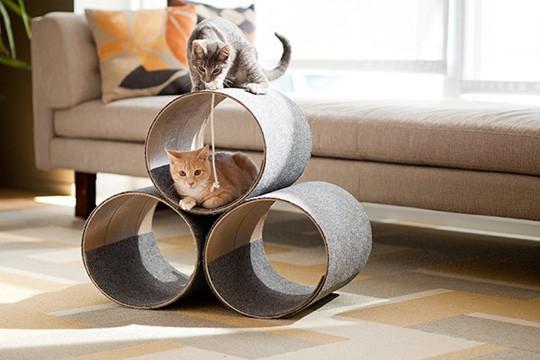 cats&cardboard_007