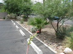 example of green parking (by: US EPA)