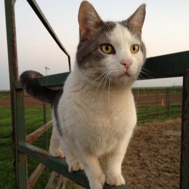 Kamakazi Cat