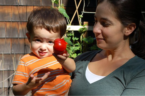 Will picks the first ripe tomato in our garden by Eve Fox, Garden of Eating blog, copyright 2011