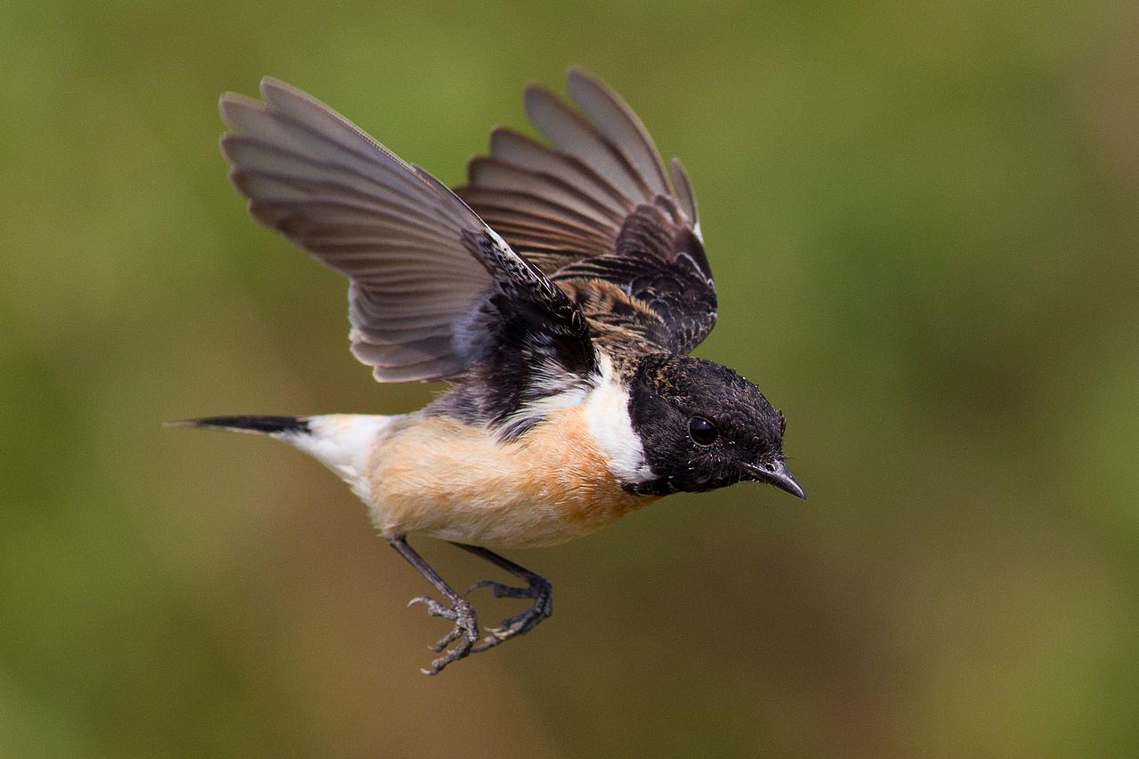 拍鳥的季節快過了....