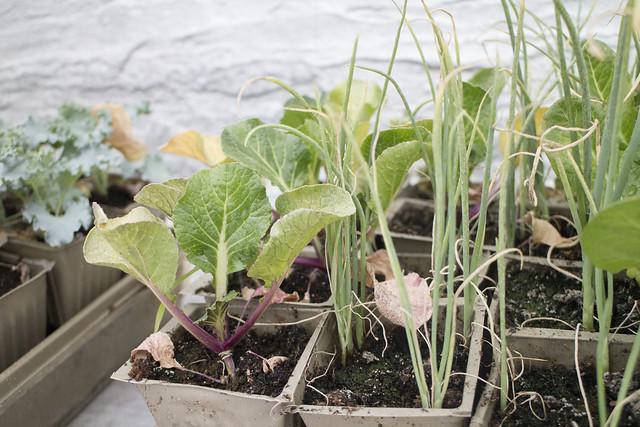 Seedling Planting Spring 2014_2