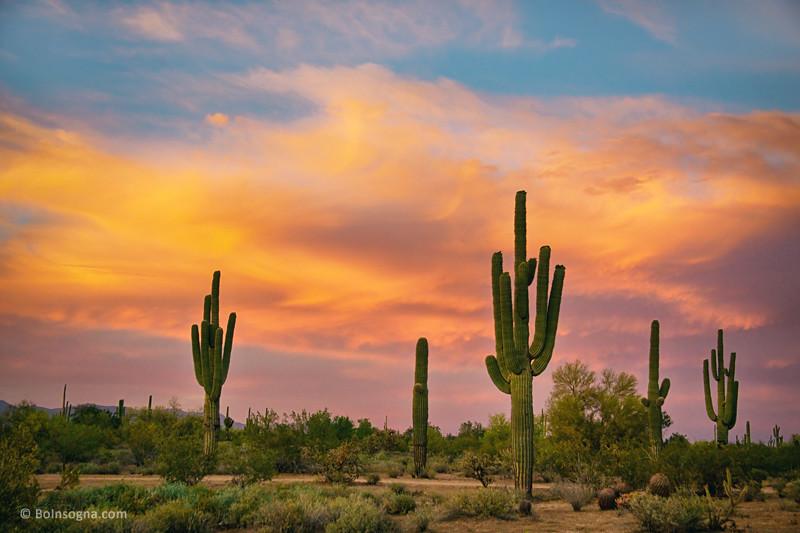 Elevation Of Fiesta At Desert Ridge Phoenix Az Usa