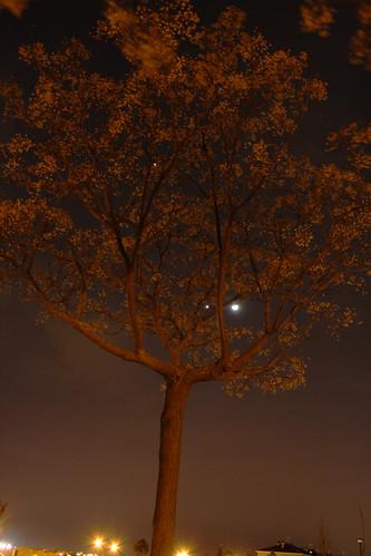 Conjunción y árbol