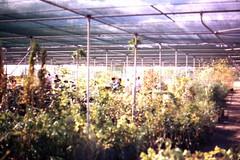 main_north_road_560_vadoulis_garden_centre_nwScan10043a