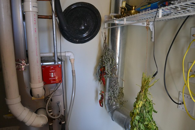 herbs drying in our furnace closet